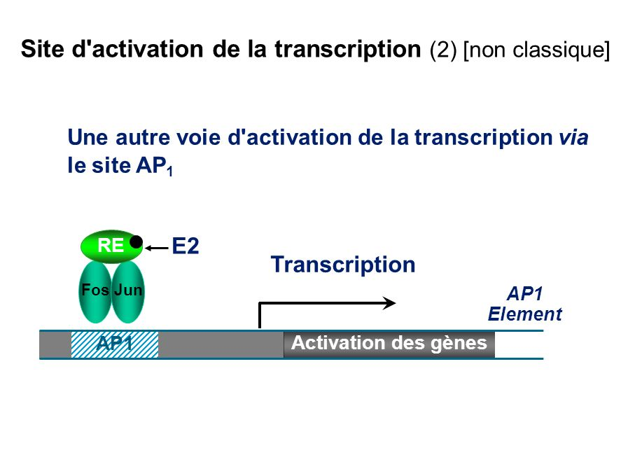 Site d activation de la transcription (2) [non classique]